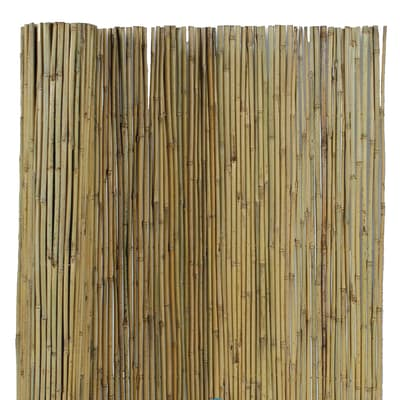 Canna Intera Bambù L 3 X H 15 M