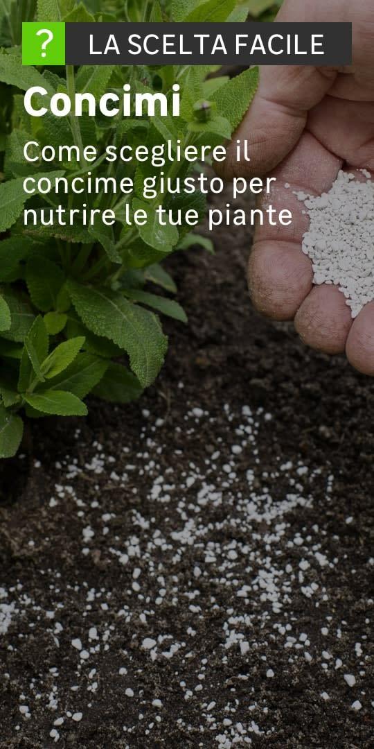 Una mano distribuisce il concime in mezzo a tante piantine