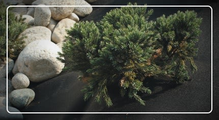 Teli protezione piante: la scelta facile