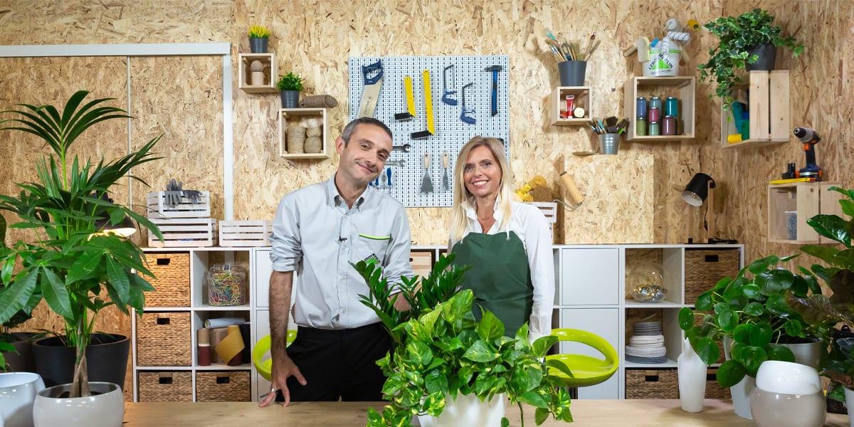manutenzione-e-cura-delle-piante-appartamento