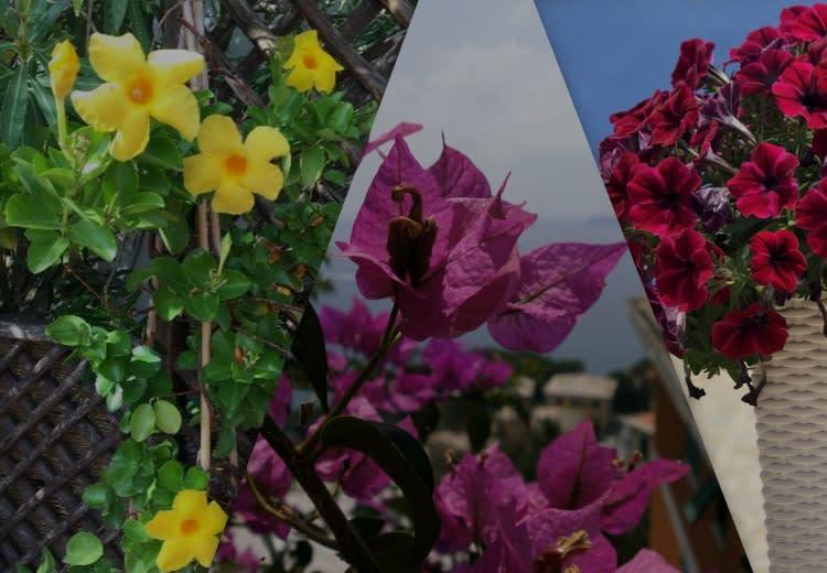 Community: 3 fiori estivi da coltivare durante la stagione più calda