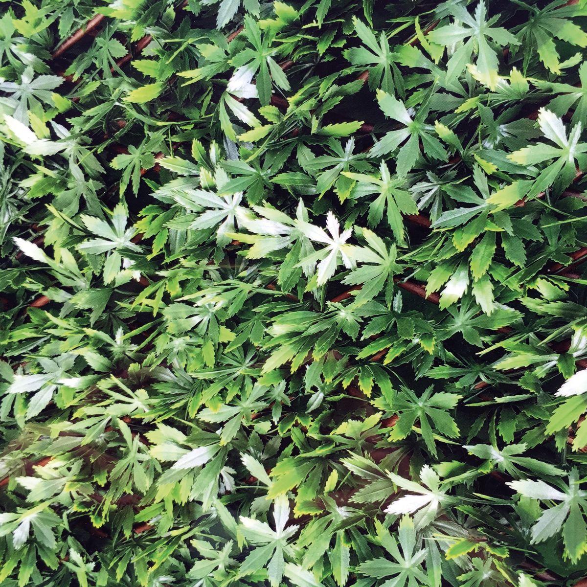 Siepi da giardino sempreverdi siepi da giardino for Siepe finta per terrazzo