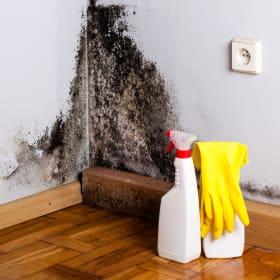 Come usare gli antimuffa ed eliminare la muffa dai muri
