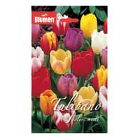 Bulbo Tulipano Trionfo colori assortiti 36 pezzi