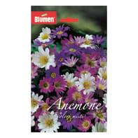 Bulbo Anemone Blanda colori assortiti 60 pezzi