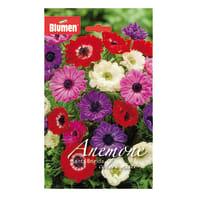 Bulbo Anemone Bridget colori assortiti 60 pezzi