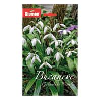 Bulbo galanthus nivalis bianco confezione da 60