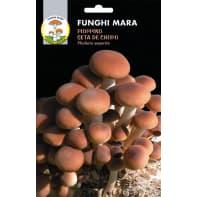 Pianta da giardino funghi pioppino seta de chopo