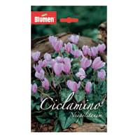 Bulbo neapolitanum rosa confezione da 6