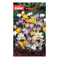 Bulbo Crocus Species colori assortiti 120 pezzi