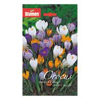 Bulbo Crocus Vernus & Flavus colori assortiti 60 pezzi
