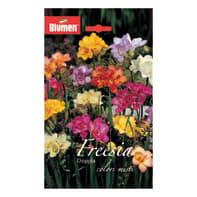 Bulbo Freesia colori assortiti 60 pezzi