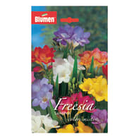 Bulbo Freesia colori assortiti confezione da 62