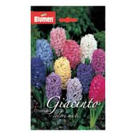 Bulbo fiore Giacinto colori assortiti 3 pezzi