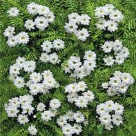 Tovaglia Primule multicolore 160x160 cm