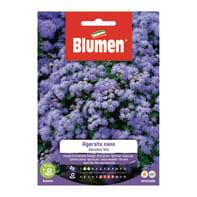 Seme fiore Agerato Nano Blu nan
