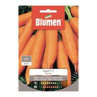 Seme per orto carota ingot