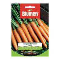 Seme per orto carota lunga di berlicum