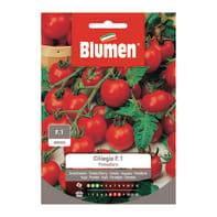 Seme per orto pomodoro ciliegia