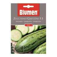 Seme per orto zucchino greyzini