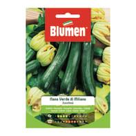 Seme per orto Zucchina zucchino nano verde di milano