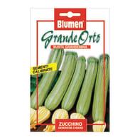 Seme per orto Zucchina zucchino genovese chiaro