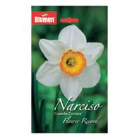Bulbo flower record bianco/arancione 24 pezzi