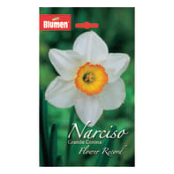 Bulbo flower record bianco/arancione confezione da 24
