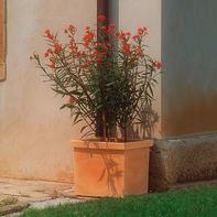 Vaso Quadro Siepi EURO3PLAST in plastica colore impruneta H 41 cm, L 47 x P 47 cm