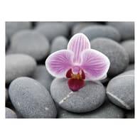 Quadro su tela Orchidea 30x40 cm