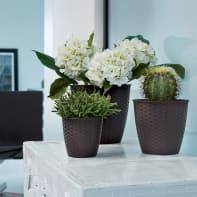 Vaso Natural STEFANPLAST in plastica colore Marrone H 22.2 cm, Ø 24 cm