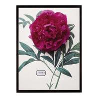 Stampa incorniciata Flor Dec - Paeon 15.7x20.7 cm