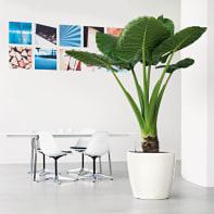 Vaso Classico Premium LECHUZA in polipropilene bianco H 40 Ø 43 cm
