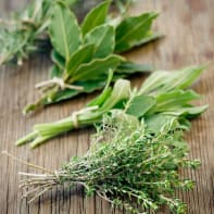 Quadro in vetro Herbs 20x20 cm