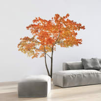 Wall Sticker Giant Orange tree