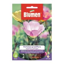 Semi da fiore Portulaca grandiflora semplice in miscuglio