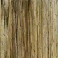 Canniccio naturale Arella Canna Passante naturale L 3 x H 2 m