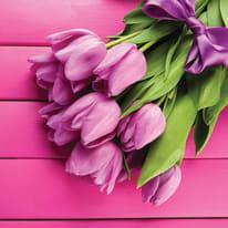 quadro su tela Tulipani rosa 60x60