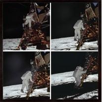 Stampa incorniciata Eagle Explorat 50 x 50 cm