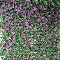 Siepe artificiale Panel bosso lilla L 0,5 x H 1 m