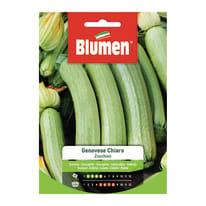Semi da orto Zucchino genovese chiaro