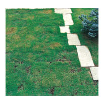 Passo giapponese in calcestruzzo 60 x 30 x 4 cm bianco