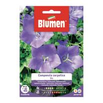 Seme fiore Campanula Carpatica blu nan