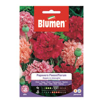 Seme fiore Papavero Paeoniflorum doppio in miscuglio nan