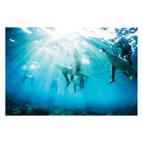 Poster Surfers 91.5x61 cm