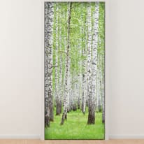 Sticker Birches 9x96 cm