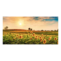 Quadro su tela Sunflowers field 90x190 cm