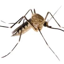 Insetticida per zanzare, vespe, calabroni 10 spirali