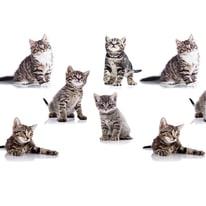 Tenda doccia Kitten in poliestere grigio L 240 x H 200 cm