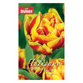 Tulipano doppio tardivo Focus
